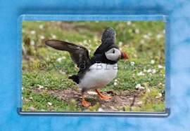 Puffin 3 magnet