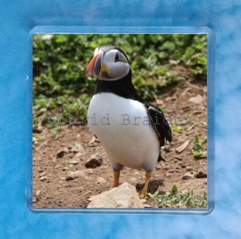 Puffin 7 magnet