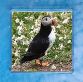 Puffin 8 magnet